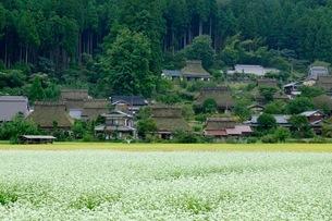 白髭神社 日本 滋賀県 高島市の写真素材 [FYI03393356]
