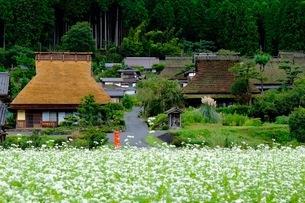 美山 かやぶきの里 日本 京都府 南丹市の写真素材 [FYI03393359]