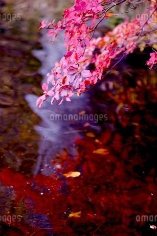 白駒池 の写真素材 [FYI03393365]