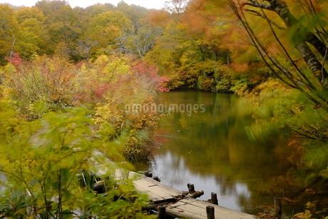 鎌池 日本 長野県 小谷村の写真素材 [FYI03393399]