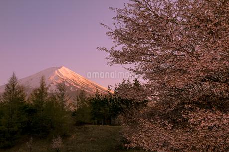 創造の森 日本 山梨県 富士河口湖町の写真素材 [FYI03393487]