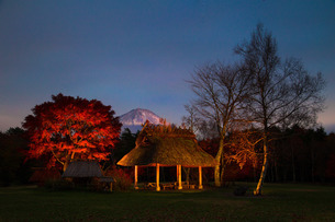 西湖野鳥の森公園 日本 山梨県 富士河口湖町の写真素材 [FYI03393509]
