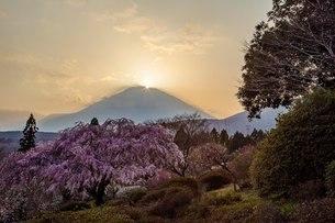 冨士霊園 日本 静岡県 小山町の写真素材 [FYI03393538]