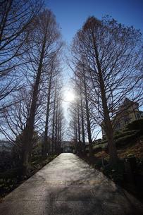 晴れた冬の遊歩道の写真素材 [FYI03393610]