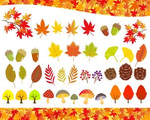 秋の植物 イラストセットのイラスト素材 [FYI03393676]