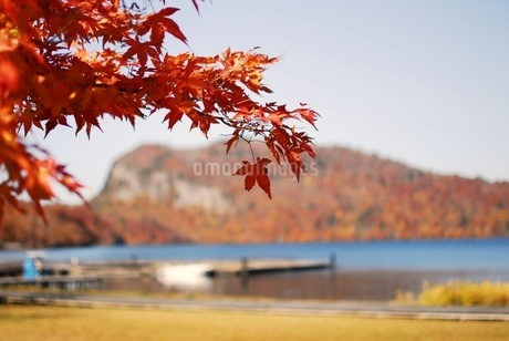 十和田湖の東湖エリア、うたるべ桟橋と御倉半島の紅葉の写真素材 [FYI03393851]