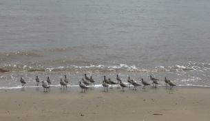 小鳥の行進の写真素材 [FYI03393937]