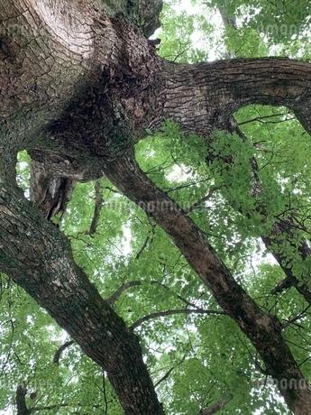 treeの写真素材 [FYI03394117]