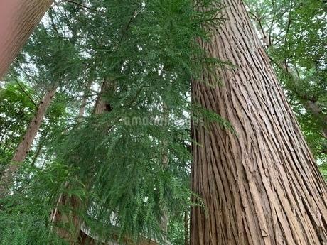 treeの写真素材 [FYI03394198]