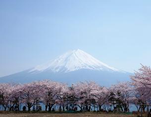 富士山と桜の写真素材 [FYI03394360]