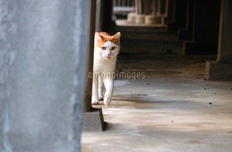 猫 / catの写真素材 [FYI03394518]