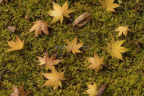 落ち葉の写真素材 [FYI03394531]