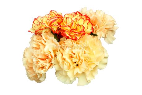 カーネーションの花束の写真素材 [FYI03394535]