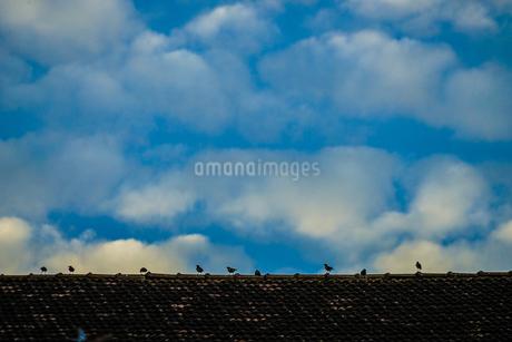 青空と小鳥のイメージの写真素材 [FYI03394546]