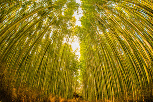 京都・嵐山の竹林の写真素材 [FYI03394558]