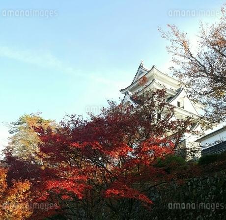 城 紅葉の写真素材 [FYI03394739]