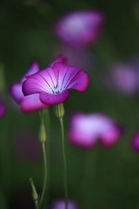 花の写真素材 [FYI03394902]