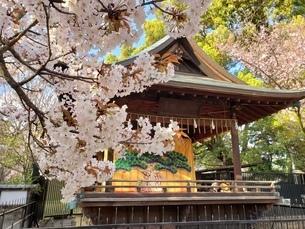 上野東照宮の写真素材 [FYI03394956]