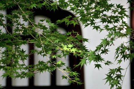 虎渓山永保寺の写真素材 [FYI03395709]
