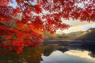 浮見堂 日本 奈良県 奈良市の写真素材 [FYI03395970]