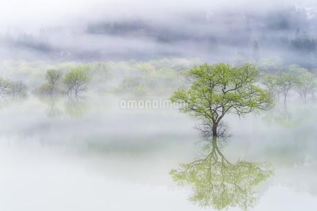 白川ダム湖岸公園 日本 山形県 飯豊町の写真素材 [FYI03395973]