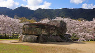 4月 桜の石舞台古墳  -飛鳥の古代石造物-の写真素材 [FYI03396017]
