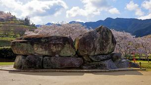 4月 桜の石舞台古墳  -飛鳥の古代石造物-の写真素材 [FYI03396018]