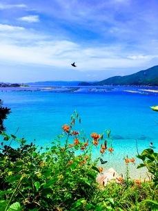 夏の海の写真素材 [FYI03396162]