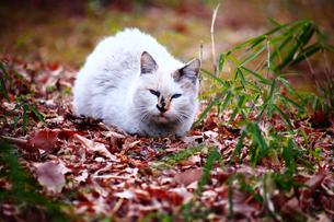 陽だまりでうたた寝する子猫の写真素材 [FYI03396224]