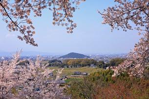 4月 甘樫丘(あまかしのおか)から桜越しに見た耳成(みみなり)山の写真素材 [FYI03396285]
