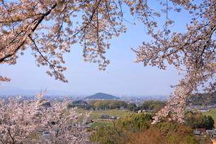 4月 甘樫丘(あまかしのおか)から桜越しに見た耳成(みみなり)山の写真素材 [FYI03396287]