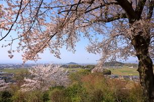 4月 甘樫丘(あまかしのおか)から桜越しに見た耳成(みみなり)山の写真素材 [FYI03396288]