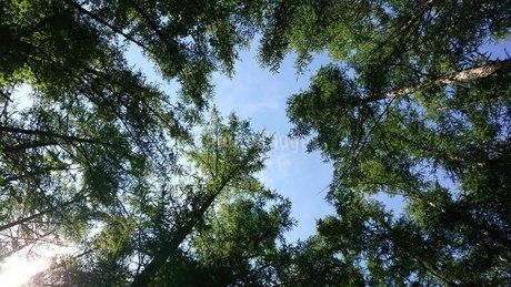 森林の写真素材 [FYI03396330]