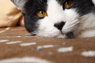 猫の写真素材 [FYI03396363]