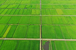 新潟県の田園風景の空撮の写真素材 [FYI03396839]