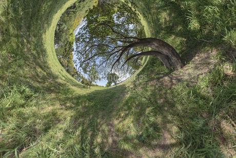 空へ伸びる木の写真素材 [FYI03396854]