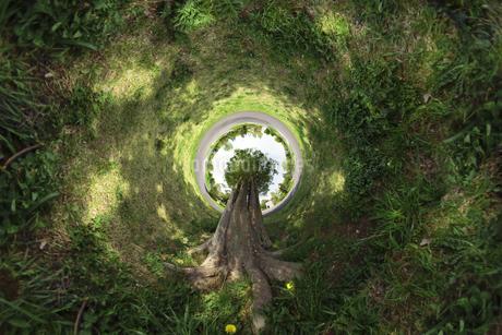 天へ伸びる1本の木の写真素材 [FYI03396857]