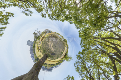 一本の木の写真素材 [FYI03396864]