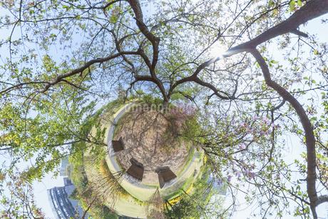 空に伸びる木の写真素材 [FYI03396865]