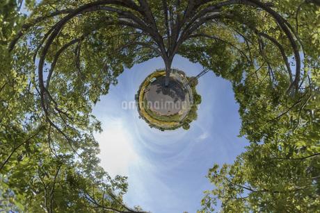 空に伸びる木の写真素材 [FYI03396867]