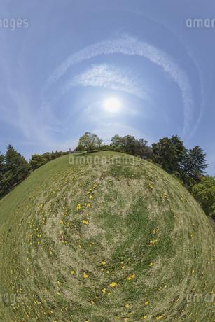 タンポポの丸い世界の写真素材 [FYI03396871]