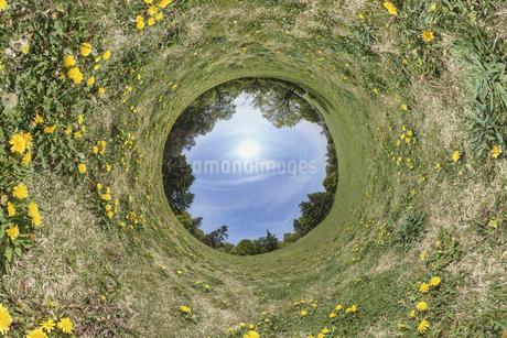タンポポの丸い世界の写真素材 [FYI03396872]