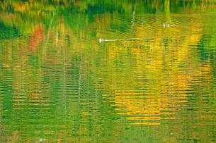 秋の五色沼の写真素材 [FYI03397015]