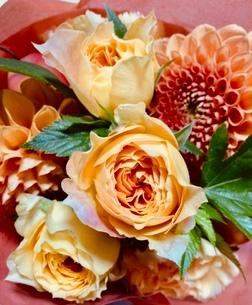 バラとダリアの花束の写真素材 [FYI03397116]