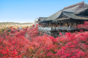 秋の清水寺本堂と京都市街の眺めの写真素材 [FYI03397184]