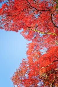 清水寺の紅葉の写真素材 [FYI03397191]
