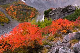 ナナカマドの紅葉(北アルプス涸沢)の写真素材 [FYI03397307]