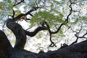 木の写真素材 [FYI03397341]