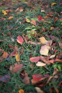 落ち葉の写真素材 [FYI03397342]