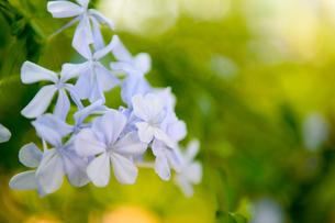 花の写真素材 [FYI03397375]
